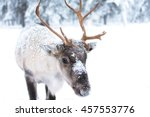 cute baby reindeer.   Shutterstock . vector #457553776