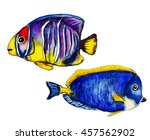 colorful tropical reef fish  ...   Shutterstock . vector #457562902