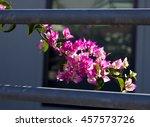 showy ornamental bracted ... | Shutterstock . vector #457573726
