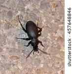 black beetle on asphalt road in ... | Shutterstock . vector #457648846