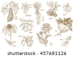 ginkgo biloba  sambucus ... | Shutterstock .eps vector #457681126