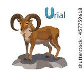Vector Letter U Urial Children...