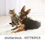 Stock photo cute cat and funny dog on carpet 457783915