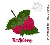vector illustration. raspberry... | Shutterstock .eps vector #457948462