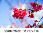 beautiful flower with blue sky... | Shutterstock . vector #457972648