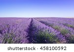 provence  lavender field at day. | Shutterstock . vector #458100592