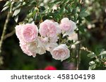 pink roses  selective focus ... | Shutterstock . vector #458104198