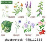 Collection Of Medicinal Plants...