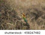 beautiful bird chestnut headed... | Shutterstock . vector #458267482