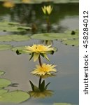 water lily lotus  a beautiful... | Shutterstock . vector #458284012