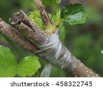 Tree Branch Layer  Tree...