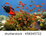 Tropical Fish And Hard Corals...