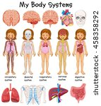 human body systems diagram... | Shutterstock .eps vector #458358292