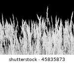 the background   the dry grass | Shutterstock . vector #45835873