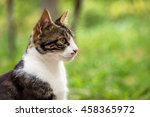 Stock photo cat in the green grass in summer 458365972