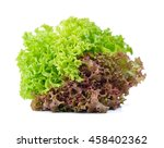 Red And Green Oak Lettuce On...
