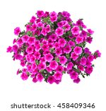 petunia flowers isolated with... | Shutterstock . vector #458409346