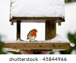 A Red Robin At A Snow Covered...
