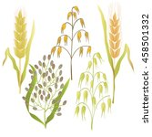 cones of barley and oats ... | Shutterstock .eps vector #458501332