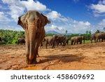 Close Up Portrait Of Elephant...