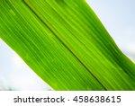 Corn Leaf In The Field