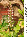 Small photo of An isolated Tall Acanthus flower amongst green foliage against a natural setting