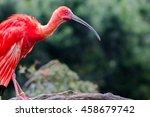 scarlet ibis | Shutterstock . vector #458679742