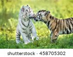 Small photo of adorable tiger cubs being affectionate with each other