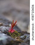 Small photo of Single red plant growing on meager stone.