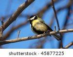 great tit  parus major | Shutterstock . vector #45877225