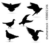 vector collection of bird...   Shutterstock .eps vector #458801146