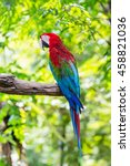 close up colorful macaw parrot... | Shutterstock . vector #458821036