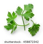 fresh green parsley leaves... | Shutterstock . vector #458872342