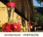 Hummingbird Feeder On A Sunny...