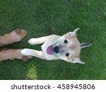 cute puppy   | Shutterstock . vector #458945806