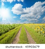 field and road under sun - stock photo