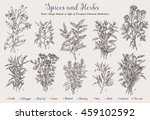 decorative vector vintage... | Shutterstock .eps vector #459102592