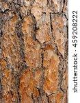 Tree Bark Texture  Tree Bark...
