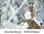eurasian lynx in winter | Shutterstock . vector #459335662
