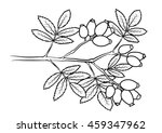 coloring page   hip | Shutterstock .eps vector #459347962