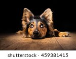 Black Brown Mix Breed Dog...