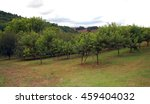 summer hill with peach orchard   Shutterstock . vector #459404032