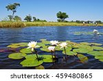 canoe trip with traditional... | Shutterstock . vector #459480865