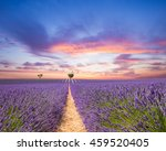 beautiful landscape of blooming ... | Shutterstock . vector #459520405