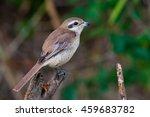 wild bird | Shutterstock . vector #459683782