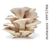 Oyster Mushroom On White...
