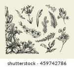 flowers. hand drawn sketch... | Shutterstock .eps vector #459742786