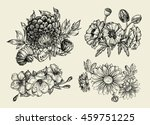 flowers. hand drawn sketch... | Shutterstock .eps vector #459751225
