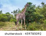 animals in south africa. the... | Shutterstock . vector #459785092