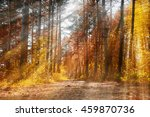 Forest Sunny Autumn Landscape ...